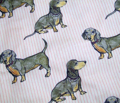 Dachshunds on stripes