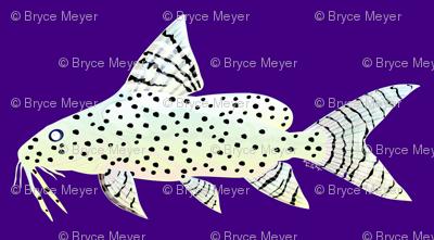 Angel Squeaker Upside-down Catfish negative purple