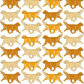 Trotting Golden Retriever border