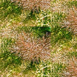 fennel 2