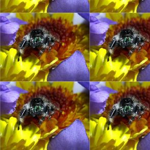spider-flower-3-8-15