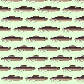 Vundu Catfish in green