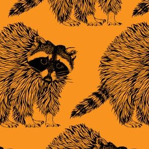 Raccoon Orange