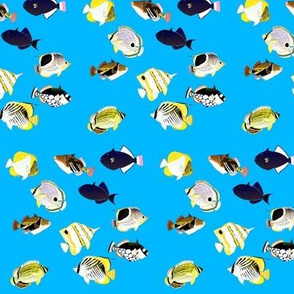 Butterflyfish and Triggers in blue