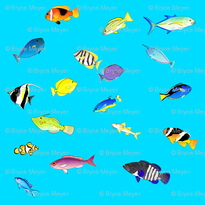 Pacific Coral Reef Fish scatter