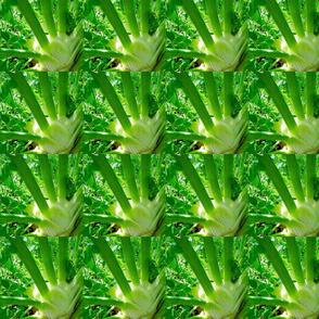 fennel 4, stars
