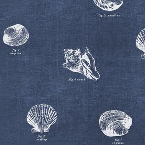 Seashell Nautical Wallpaper