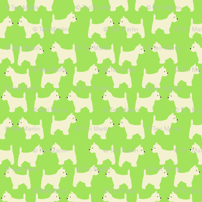 West Highland Terrier in lime green