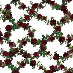 Higedly Pigeldy Rose Lattice