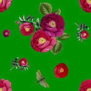 Garden Roses in Green