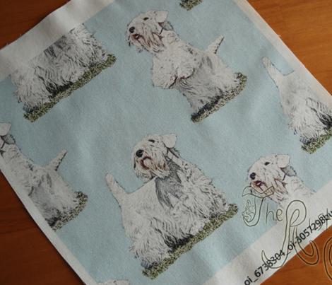 Posing Sealyham terriers - blue