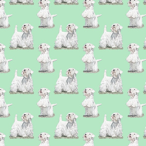 Posing Sealyham terriers - green