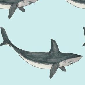 shark-ch-ch