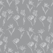 Rwhite_tulips_on_grey_shop_thumb