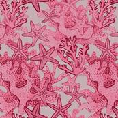 Coral & Star fish