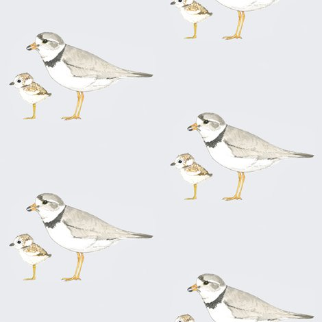Piping_plover_shop_preview