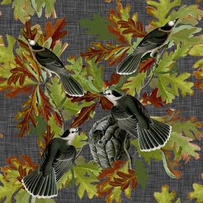 Canada Jays with Oak Leaves Dark Grey Green