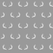 antlers // grey