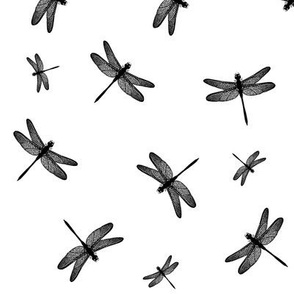 Dancing Dragonflies Black And White
