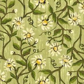 Daisy Vines 2