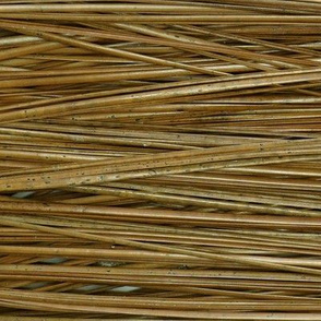 pine_lines_1
