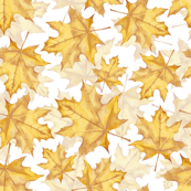 Yellow marple leaves