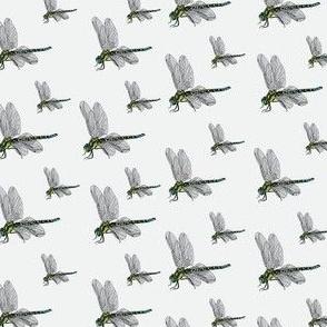 Darner Dragonflies