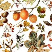 Rvintage_botanical_autumn_shop_thumb