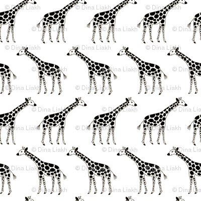 Sweet black and white giraffes