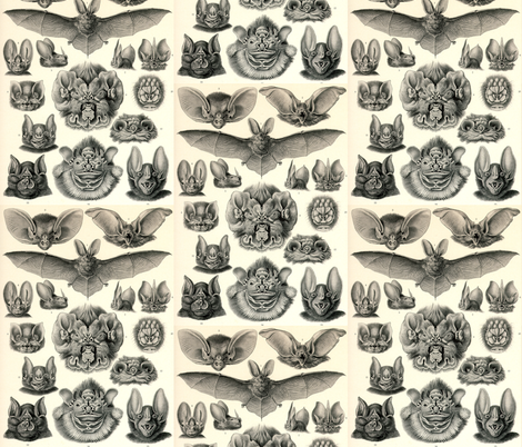 chiroptera Haeckel fabric by craftyscientists on Spoonflower - custom fabric