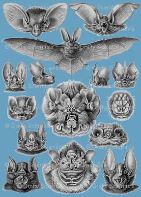 chiropterablue