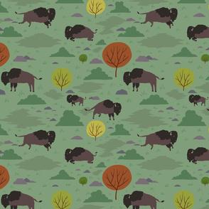 Roaming Bison