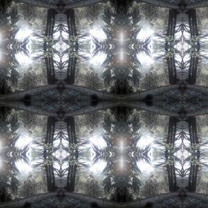 Iced_Trees1