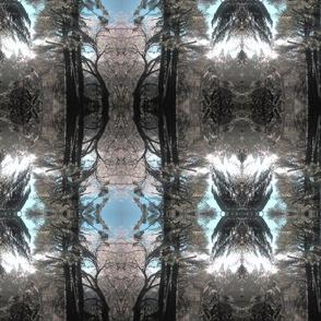 Iced_Trees2
