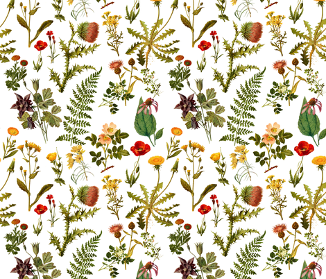 vintage botanical wildflowers-small fabric by redbriarstudio on Spoonflower - custom fabric