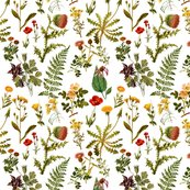 Rrrrrvintage_botanical_wildflowers2_shop_thumb