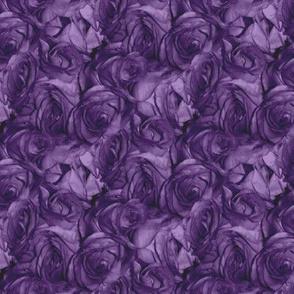 Royal Roses ~ Medium