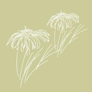 English Garden Echinacea sketch