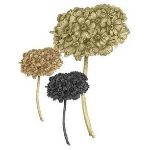 primula_large_bronze_and_gold