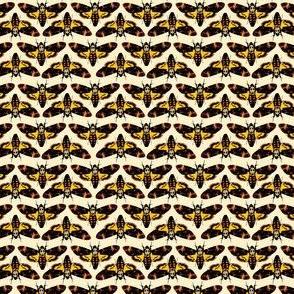 Hannibal Moth