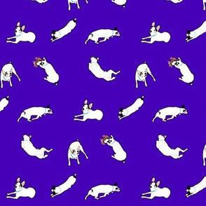 Puppy in purple