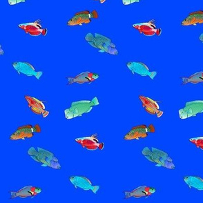 Wrasses Scatter