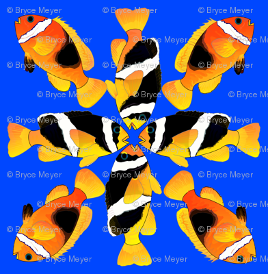 Clownfish Diagonal Pattern