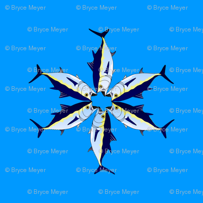 Bluefin tuna star on blue