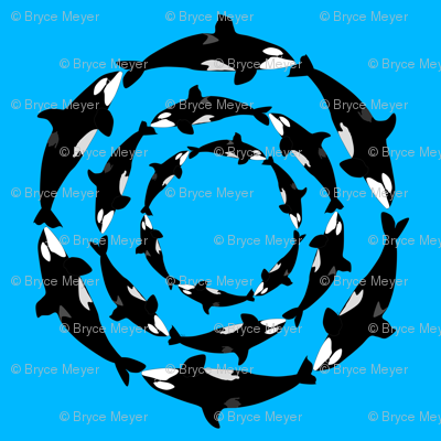 Orca 3x6 circle pattern on blue