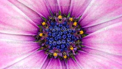 Rflower_in_my_garden_preview