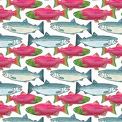 Rspawning_salmon_in_color_shop_thumb