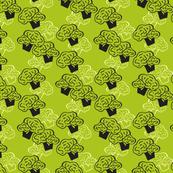 Broccolis