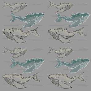 Whales_detailed_v2