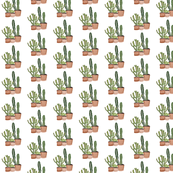 Southwest Succulents and Cactus Plants small design